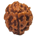 Three Face Java Rudraksha
